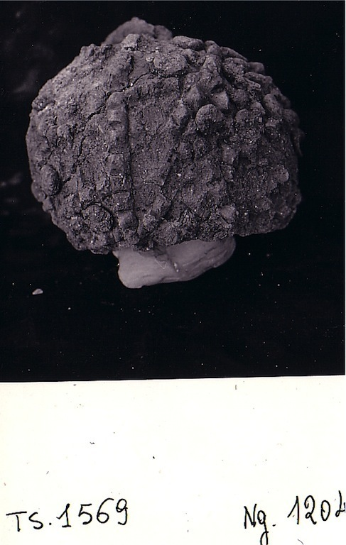 TS 1569